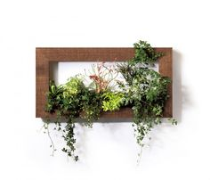 Wall frame with flowers PIANTA×STANZA
