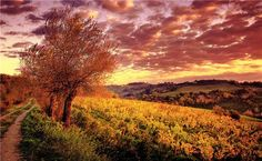 Sunset at a vineyard in Tuscany.
