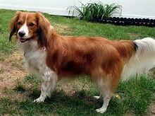 I need a dog like that