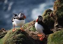 Shetland Web Cams - Bing Images
