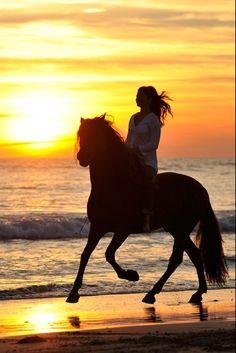 un caballo al trote en la playa Más