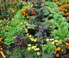 Kompatibilne biljke za sadnju u vrtu