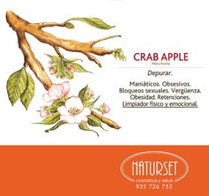 crabb-apple Bach Flowers, Reiki Healer, Wall Decor Pictures, Picture Wall, Flower Power, Remedies, Spirituality, Apple, Herbs