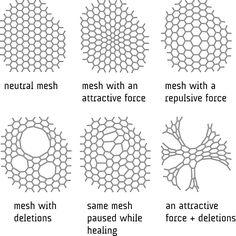 radiolaria-diagram.jpg