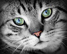 Kat, Dierlijke, Dierlijke Portret