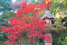 Yoshiminedera Temple, Kyoto, Japan.