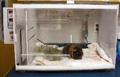 Exotics: Small Mammal Intensive Care Unit