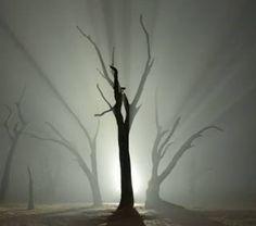 Namibian Nights – Stunning Deadvlei Time-Lapse