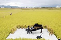 Taiwanese pianist Chen Kuan-yu performs in the middle of a rice paddy in Chishang, Taiwan.