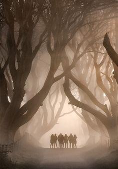Captured before sunrise on a cold foggy December morning this group of Japanese tourists arrived at 'The Dark Hedges'. The place is said to be haunted by a 'Grey lady' who walks under the shrouded arches of the beech trees. Ireland