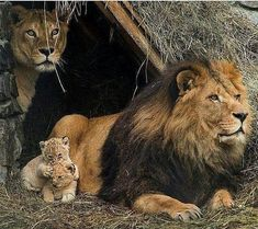 """610 Likes, 14 Comments - Wild nature and cute animals (@wildlifeclup) on Instagram: """"Beautiful Family #wildlifeclup"""""""