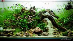 Guide to growing freshwater aquarium plants    For most aquarium plants the ideal C02 level is anywhere from 10 to 25ppm