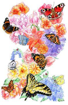 Butterfly Guide by Abby Diamond, via Behance