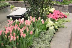 tulppaanit puutarhassa - Google Search Perennials, Bloom, Garden, Plants, Google Search, Garten, Lawn And Garden, Flora, Gardening