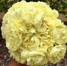 Peach Flowers, Cream Flowers, All Flowers, Colorful Flowers, White Flowers, Flowers Online, Wedding Flowers, Yellow Carnations, Mini Carnations