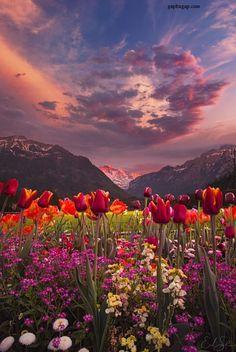 Beautiful Photo Of Nature