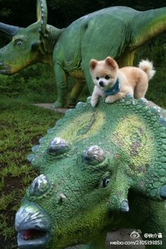 there's a puppy on a dinosaur. your argument is invalid.
