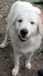 Seattle Purebred Dog Rescue Petfinder