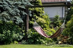Marzenia i plany vs. rzeczywistość - strona 129 - Forum ogrodnicze - Ogrodowisko