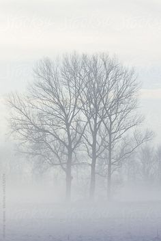 Trees in the mist by michela ravasio