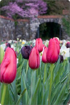 Biltmore Blooms at Biltmore