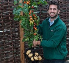 'TomTato' plant grows tomatoes above, potatoes below at the same time | RandomlyNew