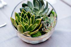 plantes-succulentes-bol-verre-idee-deco-table