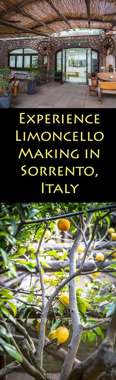 Travel to Sorrento, Italy to experience Limoncello making