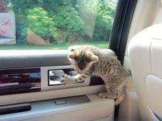 Car ride anyone?