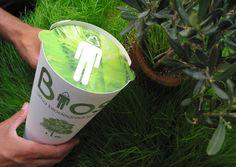 Urna biodegradável germina uma árvore