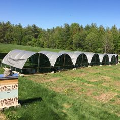 Scaling Up Our Pastured Poultry from Backyard to Commercial – Homesteading and Livestock