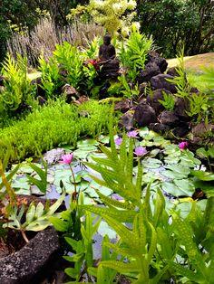 our pond e midwikis