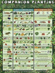Companion planting: Which plants work well with each other, and which don't.