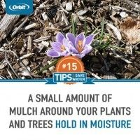 Use mulch to hold in moisture