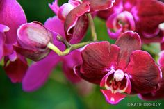 Orchids, orchids, and more #orchids ... #orchidshow