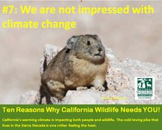 California wildlife needs you! We need to reach our year-end goal by 12/31 of $10,000 and we are over halfway there. Can you help? Donate at https://online.nwf.org/site/Donation2;jsessionid=D9A6F1DD0FF372DF2C532435193A7A8E.app244a?df_id=33060&33060.donation=form1&s_src=Donate_Regional_California_Web_SidebarButton&adid=8529984  The pika, mountain lions, porpoises and ALL California wildlife thank you!