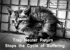 Trap*Neuter*Release