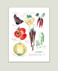 """Heirloom vegetables Archival giclee reproduction print from my watercolor illustration. Printed on fine art """" BFK Rives """" hot-pressed paper, smooth surface, 140 lb, cotton (ac Watercolor Food, Watercolor Print, Watercolor Paintings, Art Paintings, Watercolor Illustration, Menu Illustration, Watercolours, Painting Art, Watercolor Flowers"""