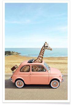 Noir Gallery Giraffe Humor Car Fiate Beach Unframed Art Print/Poster x Funny Giraffe, Giraffe Art, Cute Giraffe, Giraffe Humor, Giraffe Pictures, Animal Pictures, Wall Pictures, Fiat 500, Cute Baby Animals