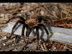 Over feared, and heavily misunderstood, spiders fill an important niches within the ecosystem. Spiders have an incredible diversity of species, many produce ...