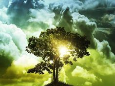 scripture about trees | The Right to the Tree of Life
