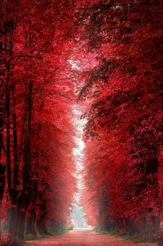 Marsala wedding Burning Red Forest - Roskilde, Denmark would be a perfect hallway full length picture/painting with black doors. Beautiful World, Beautiful Places, Beautiful Pictures, Beautiful Roads, Amazing Places, Marsala, Color Of The Year, Amazing Nature, Belle Photo