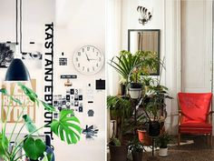 Want to breathe easy in your home? Filter your air without filtering too much cash from your wallet with these easy-to-care-for indoor plants.