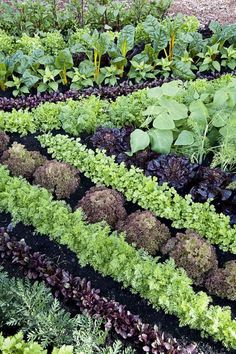 Growing Vegetables 11 plant combos you should grow side-by-sidee - Companion Planting - Companion planting just may help your garden grow. Potager Garden, Veg Garden, Garden Plants, Edible Garden, Garden Pavers, Permaculture Garden, Garden Insects, Leafy Plants, Permaculture Design