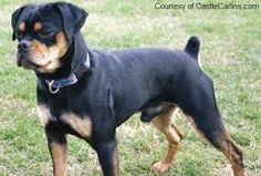 Image result for rare dog breeds