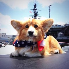 In pawnor of humans and pups who served the U.S.A.