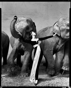 Dovima with elephants, evening dress by Yves St. Laurent for Dior, Cirque d'Hiver, August 1955