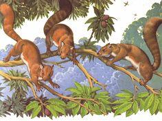Reconstrucción de especímenes del género Plesiadapis.