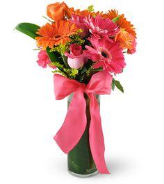 Product Not Found - Brampton, ON Florist Carnations, Gerbera Daisies, Flowers, Orange And Pink Wedding, Flora Botanica, Cylinder Vase, Purple Roses, Wedding Hair Accessories, Flower Decorations