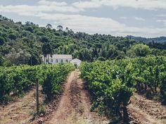 Enoturismo: as melhores quintas para uma escapadinha de Lisboa